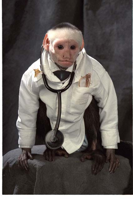 doctor Irving, a white-faced capuchin money is used in the treatment of physically and emotionally injured children.