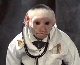 Dr Irving The White Faced Capuchin Monkey Resume